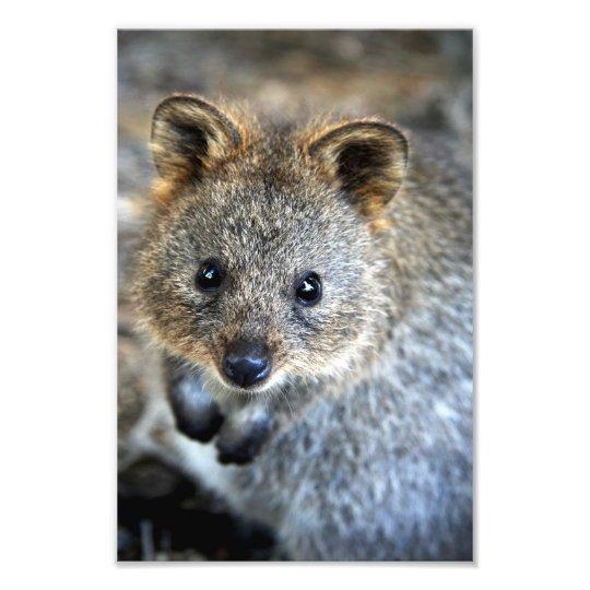 Australisches Beuteltier