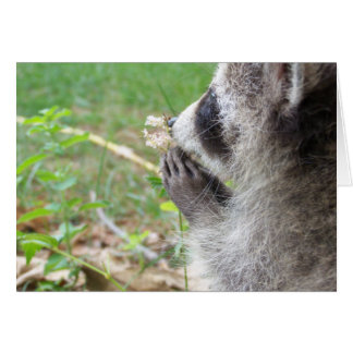 Raccoon mit Blume notecard Karte