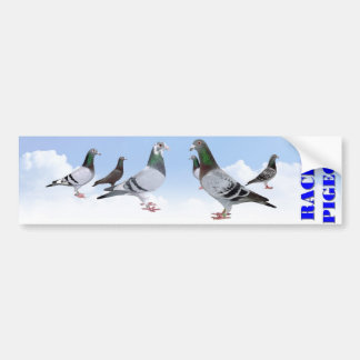 Racing Pigeons Autoaufkleber