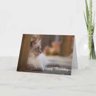 Ragdoll Birthday Card