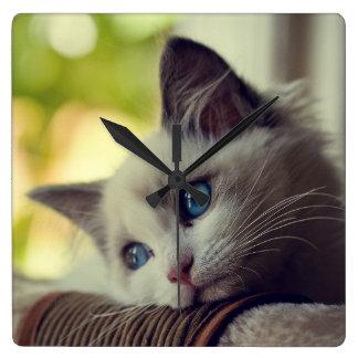 Ragdoll Kätzchen Quadratische Wanduhr