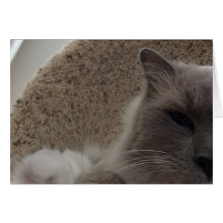 Ragdoll Katze, Karte