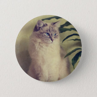 Ragdoll Cat Badge