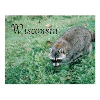 Ramblin Waschbär Postkarte
