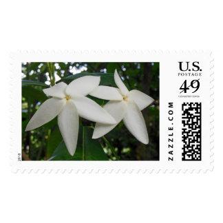 Randia SP. Briefmarken