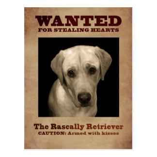 Rascally Retriever, alias gelber Labrador Postkarte