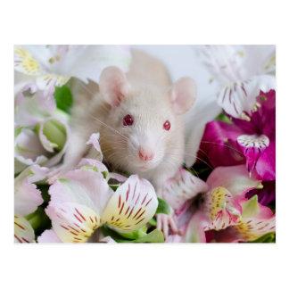 Ratte in den Blumen Postkarten