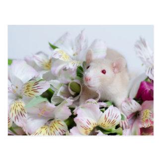 Ratte in den Blumen Postkarte