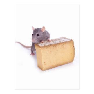 Ratte mit Käse Postkarte