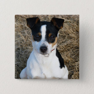 Ratte Terrier Quadratischer Button 5,1 Cm