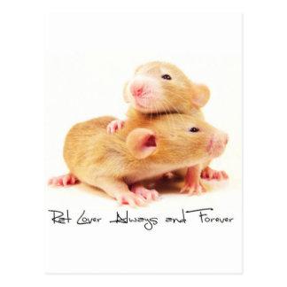 Ratten-Liebhaber immer und für immer Postkarte