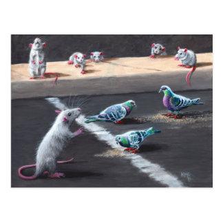 Ratten und Tauben-Postkarte Postkarte