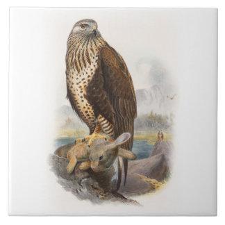 Rau-mit Beinen versehene Bussard Gould Vögel von Fliese