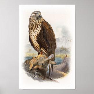 Rau-mit Beinen versehene Bussard Gould Vögel von Poster