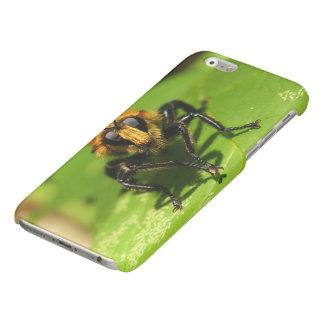 Räuber-Fliege