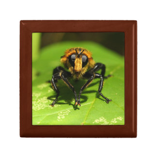 Räuber-Fliege Geschenkbox