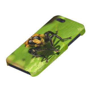 Räuber-Fliege iPhone 5 Hülle