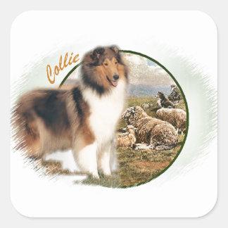 Rauer Collie-Wächter der Schafe Quadratischer Aufkleber
