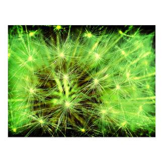 Raum-Pflanze - Löwenzahn nahes hohes Lomo Postkarte