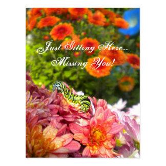 Raupe vermisst Sie Postkarte
