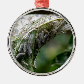 Raupen-Luken-Kokon-Regen-Fall Silbernes Ornament