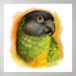 Realistische Malerei Senegal-Papageien Poster