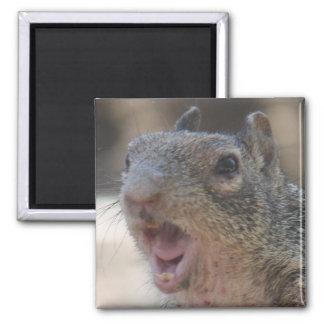 Rechthaberischer Eichhörnchen-Magnet Quadratischer Magnet