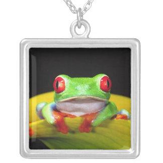 Red Eye Treefrog, Agalychinis callidryas, gebürtig Versilberte Kette