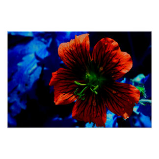 Red Flower with Tears Poster