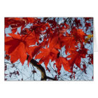 Red Maple Leaves Karte