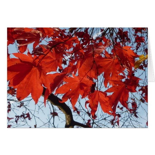Red Maple Leaves Karte