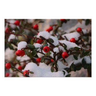 Red SnowBerries Poster
