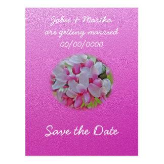 Redbud Baum-Blüten-Einzelteile Postkarte