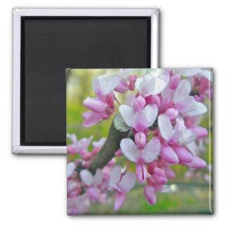 Redbud Baum-Blüten-Einzelteile Quadratischer Magnet