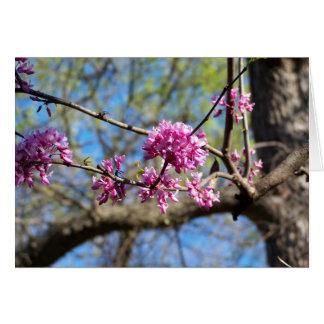 Redbud Baum herauf nahes Karte