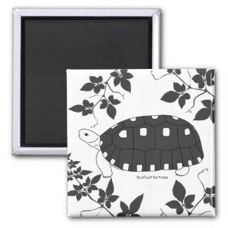 Redfoot Schildkröten-Magnet (b/w) Quadratischer Magnet
