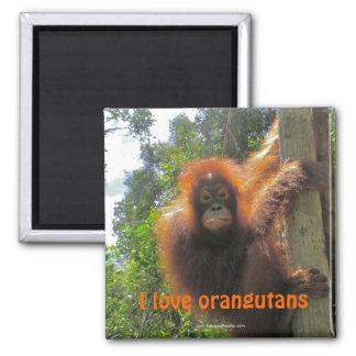 Redhead-Orang-Utan in Indonesien Quadratischer Magnet