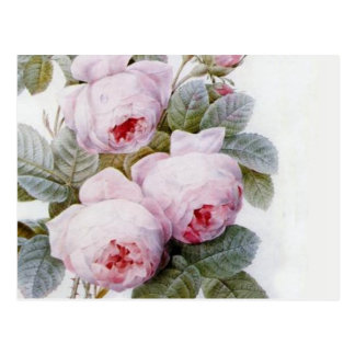 Redoute 4 Rose Postkarten