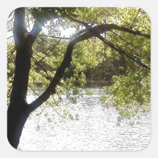 Reflexionen im Holz Quadratischer Aufkleber