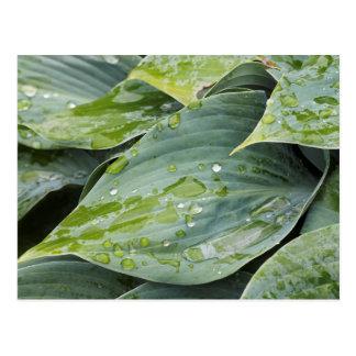 Regen auf Blätter Postkarte