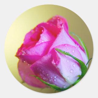 Regen-Tropfen-Küsse der Natur auf rosa Rose Runde Aufkleber