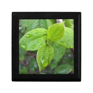 Regen über Blätter Geschenkbox
