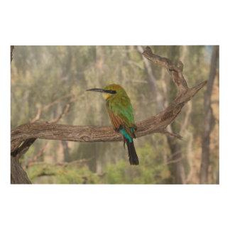Regenbogen Bieneesser Vogel, Australien Holzwanddeko
