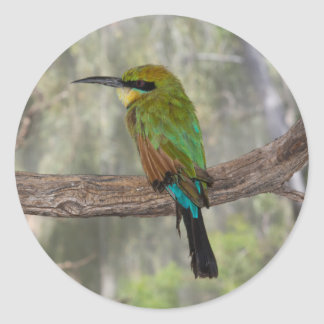 Regenbogen Bieneesser Vogel, Australien Runder Aufkleber