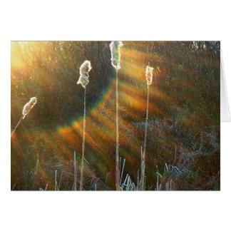 Regenbogen des Lichtes auf den Cattails Karte
