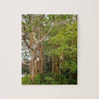Regenbogen-Eukalyptus-Bäume, Maui, Hawaii, USA Puzzle