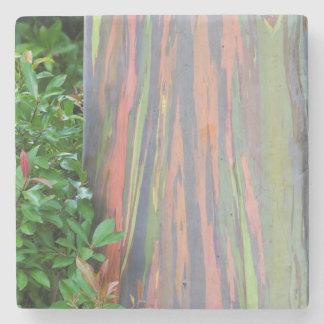 Regenbogen-Eukalyptus Steinuntersetzer