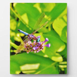 Regenbogen färbte Libelle auf einer lila rosa Fotoplatte