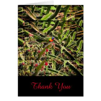 Regenbogen Lorikeet im Kaktusfreien raum danken Karte