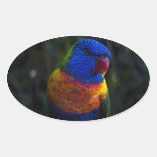 Regenbogen Lorikeet Ovaler Aufkleber